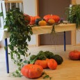 Comme pour chaque moment festifs de l'année, les résidents du Clos et de la Résidence de l'Illmatt et les jeunes de l'Institut Don Bosco se sont retrouvés pour fêter Halloween. […]